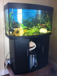 Adrian and Nuala's fish tank that had to be sold before the Gap Year began