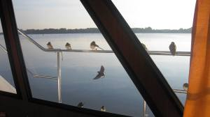 Birds land on boat moored - maybe they are telling us to hurry up and go home before winter!